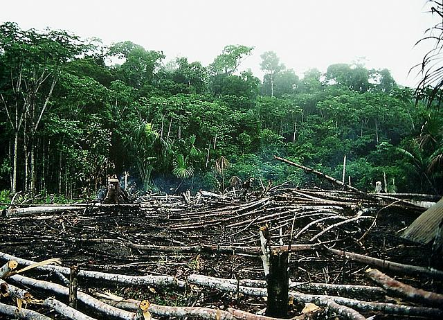 Rainforest deforestati...