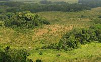 Heterothele & Phoneyusa habitat, gallery tropical forest overview, Gabon
